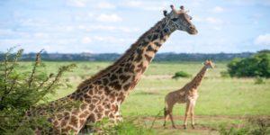 Flights to Nairobi, Kenya from $1116 return flying Etihad (SYD/MEL/BNE) – Save $380!